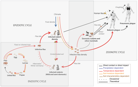 Plague cycle including hosts and vectors with abiotic influences