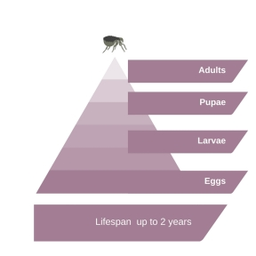flea-pyramid-1
